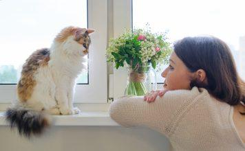 ženska gleda mačko - komunikacija z mačko