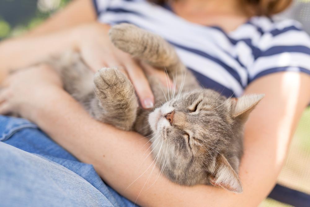 Glasnejše kot je predenje, bolj mačka uživa, vendar se lahko to ugodje zelo hitro spremeni v neugodje, ki ga mačka izrazi z ob glavo položenimi ušesi, opletanjem repa, trzanjem z okončinami in pihanjem.