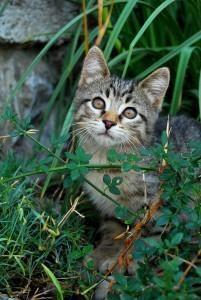 V kolikor opazimo prepoznavne znake zastrupitve, takoj poiščemo pomoč veterinarja.