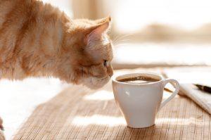 kopi-luwak-kava-iz-macjih-iztrebkov