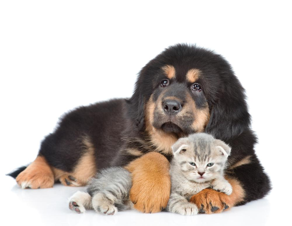 Svetovni dan boja proti mučenju živali