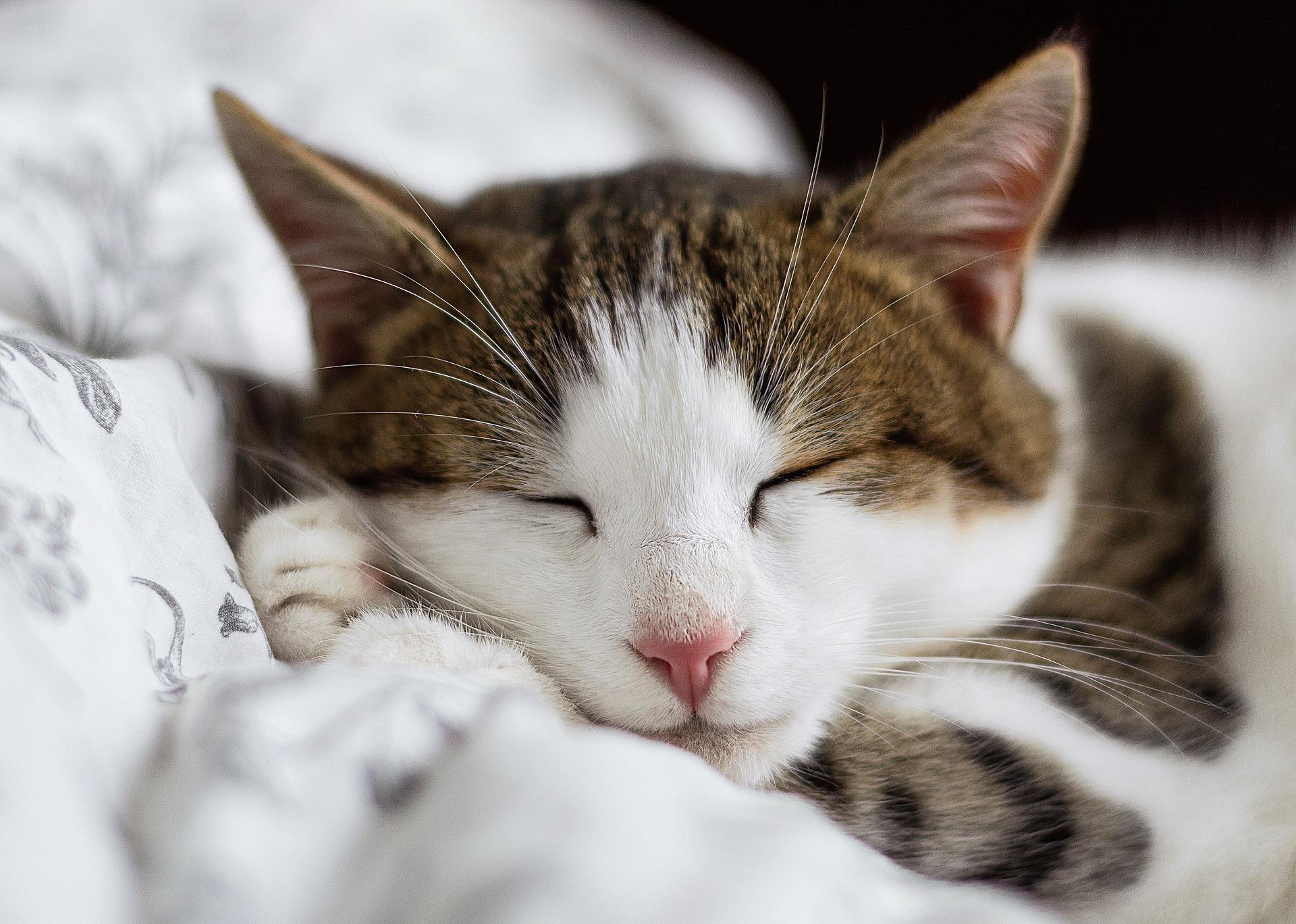 Kako muco navaditi na to, da bo tudi ona noč izkoristila za počitek, vas pa bo spet začela buditi običajna budilka?