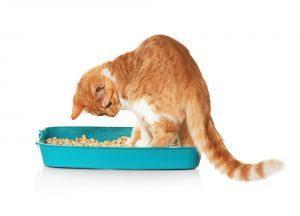 Zakaj domače mačke zakopavajo kakce?