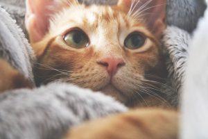 Čeprav so zelo samozadostne, moramo tudi mačkam čas, ki ga prebijejo same, malo popestriti.