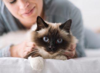 Kakšna je dejanska razlika med življenjem z mačko ali življenje s psom, tokrat vam to predstavljamo v spodnjem videu posnetku, ki predstavlja najbolj prepoznavne razlike in podobnosti v teh življenju z enim ali drugim.