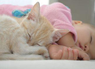 Potrebno se je zavedati, da, kot je za vas otrok nova stopnica v življenju, je tudi za vašo nadobudno mačko novost in velika sprememba v njenem življenju.