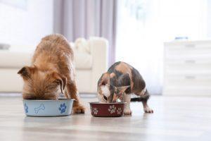 Pri vsaki živali pa je seveda pri prehrani v prvi vrsti pomembno, da izberete kvalitetno hrano.