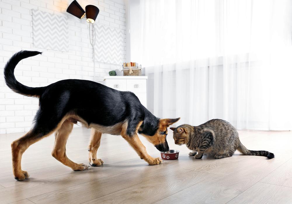 Mačke in psi sodijo v različne skupine živali, zato se razlikujejo tudi njihove prehranjevalne potrebe. Psi so v osnovi vsejedci, medtem ko so mačke v osnovi mesojedke.