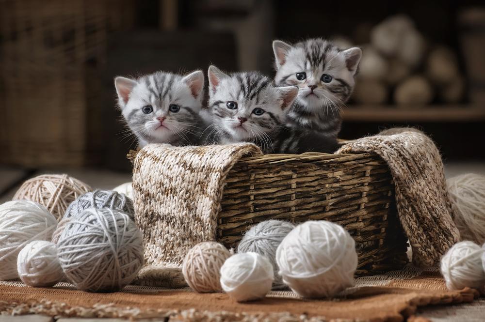 Vsaka mačka ima svoj karakter; nekatere se raje crkljajo, druge niso take ljubiteljice dotikov, ene so bolj umirjene in najraje poležavajo, nekatere pa bi se rade veliko igrale.