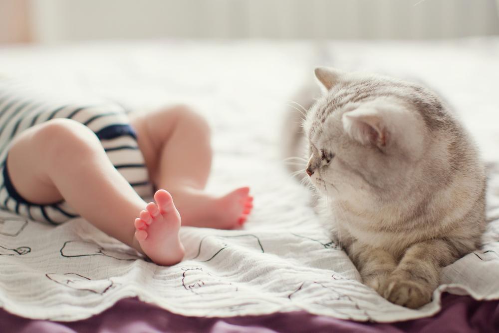 Ob rojstvu otroka se vam bo najbrž svet vrtel okoli novorojenčka, a ne gre pozabiti, da je mačka bila doma pred otrokom.