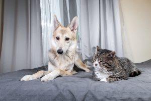 Pri strokovnjakih se pozanimajte o telesni govorici psov in mačk ter ob združitve bodite zelo pozorni na znake nelagodja.