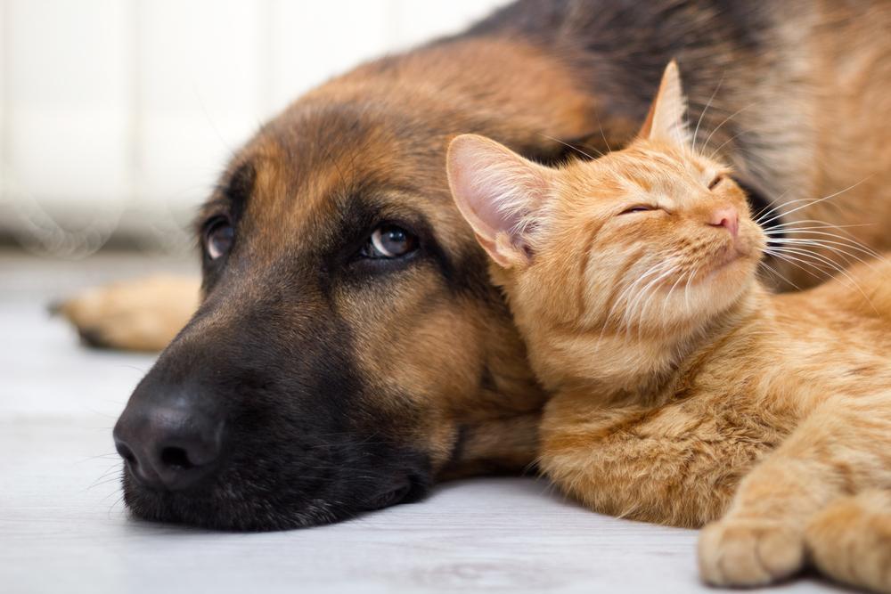 Če se odločite, da boste doma imeli psa in mačko, je pomembno, da ste na začetku nekoliko previdni pri združevanju.