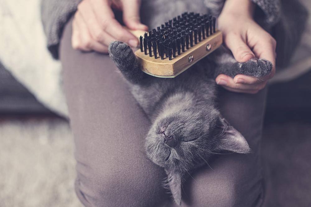 Mačke s kratko dlako potrebujejo krtačenje približno enkrat tedensko, dolgodlake mačke pa včasih krtačenje potrebujejo tudi vsak dan.