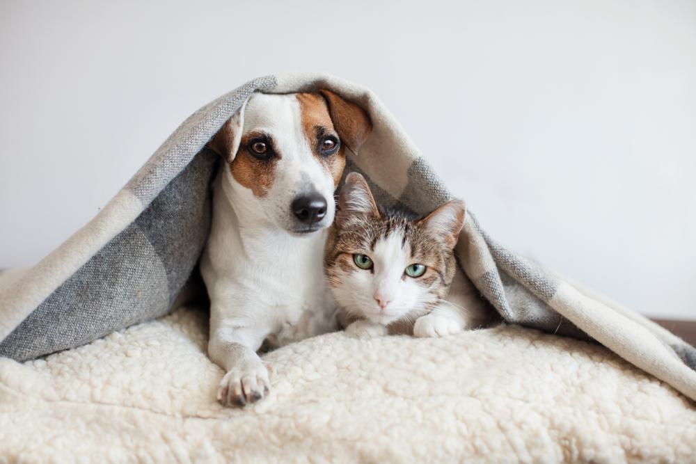 Star pregovor pravi, da ljudje, ki so si kot pes in mačka, niso ravno dobri prijatelji in so si večino časa v laseh. Seveda pa si vsak dober lastnik želi, da bi se mačka in pes razumela.