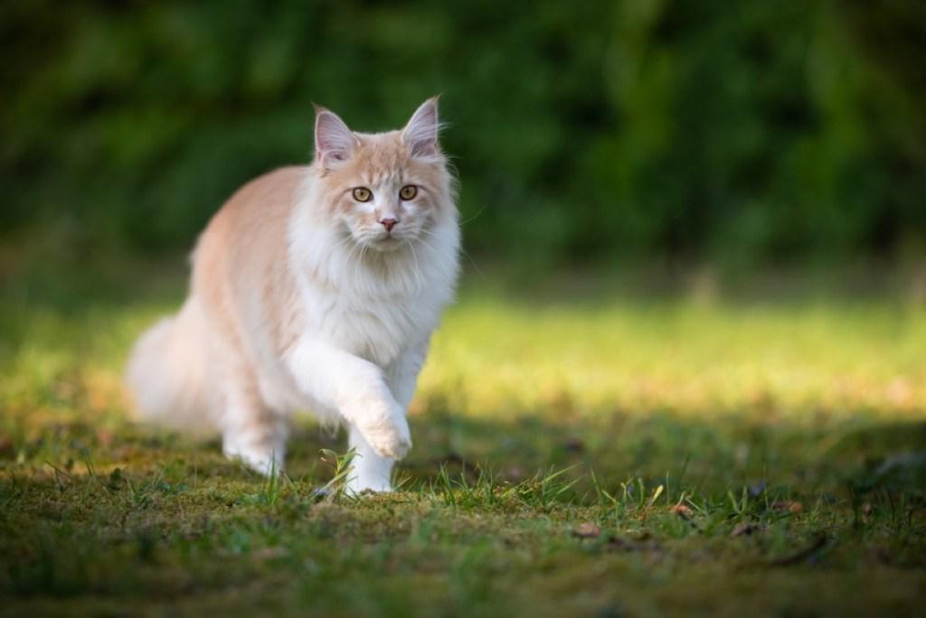 Mačke predstavljajo za vsakega lastnika del družine, a ob tem se premalokrat zavedajo, da lahko naši mačji kosmatinci prenesejo nekatere bolezni tudi na človeka. Katere bolezni, kakšni so simptomi in kakšno nevarnost predstavljajo?