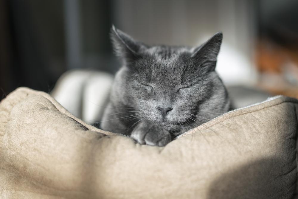 Mačke v povprečju doživijo nekje od 16 do 20 let. Kakšna bo njihova življenjska doba, pa je odvisno od zdravja, aktivnosti in seveda tudi pasme mačke.