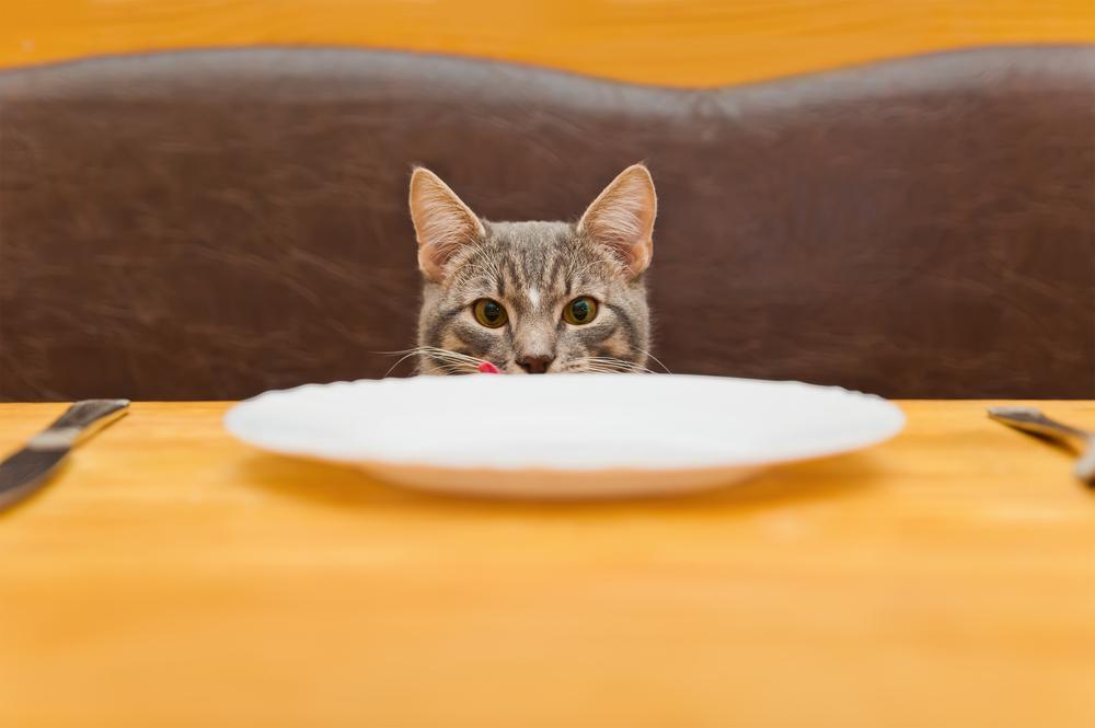 Kar je primerno za našo prehrano, še ne pomeni tudi, da je primerno za prehrano vaše mačke!