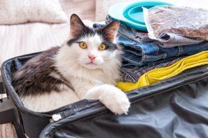 Pred samim odhodom na potovanje pa je sevedaključna predpriprava. Pomembno je, da pripravite vse, kar bo mačka potrebovala v času potovanja.