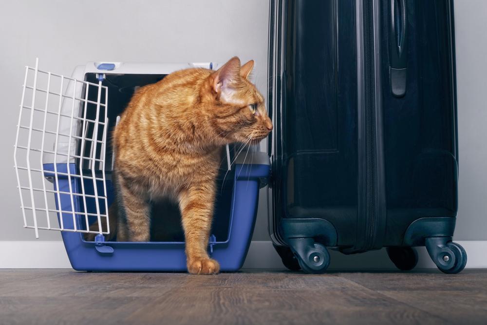 Mačke v večini ne marajo potovati, ne marajo sprememb okolja ali ljudi.