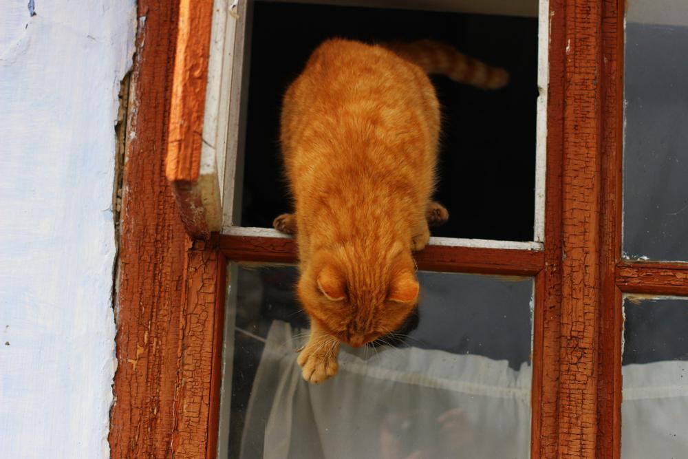 Pri mačkah, ki so zunanje, je potepanje morda nekoliko manj nenavadno, je pa zato pri notranjih mačkah pobeg še toliko bolj zaskrbljujoč.