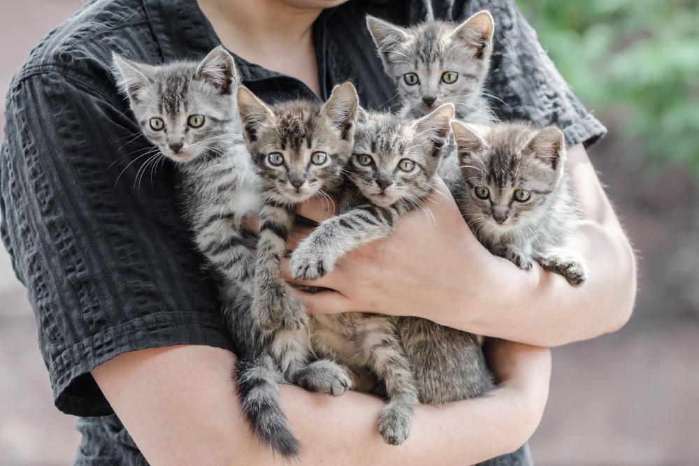 Ni vsaka mačka primerna za vsakega človeka – imajo različne potrebe, zato morate prej dobro razmisliti, če jih boste lahko zadovoljili.