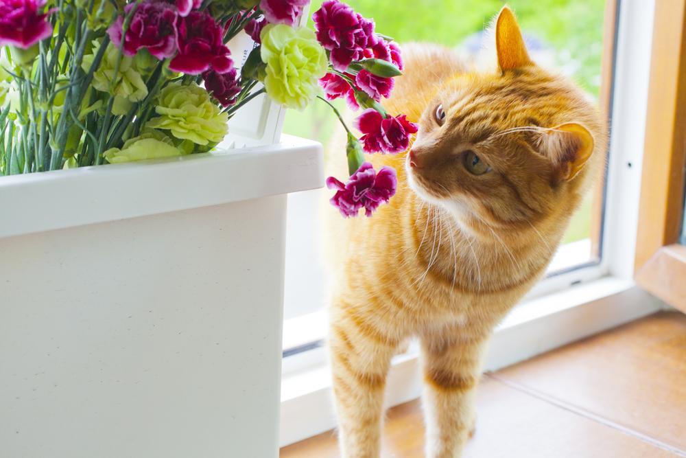 Predstavljamo vam mačkam nevarne rastline in hkrati še simptome, ki se pojavijo ob zaužitju ali stiku z njimi.
