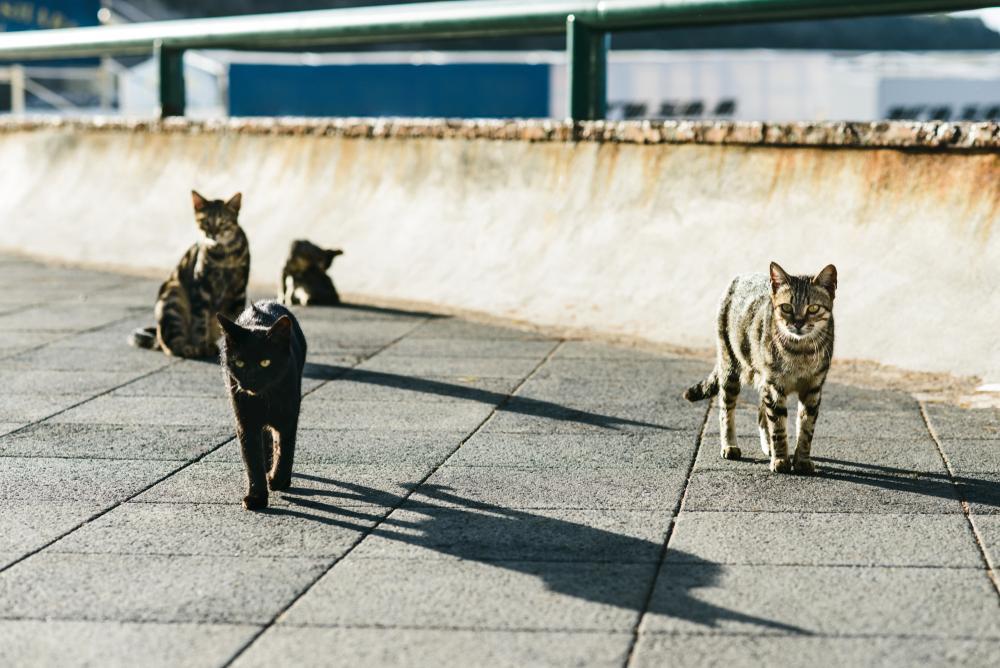 Sterilizacija mačke je poseg, pri katerem mačji samici odstranijo jajčnike in/ali maternico.