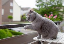 mačka sedi na balkonu