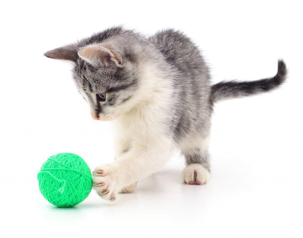 mačka z žogico