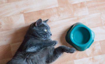 mačka ob posodi z vodo