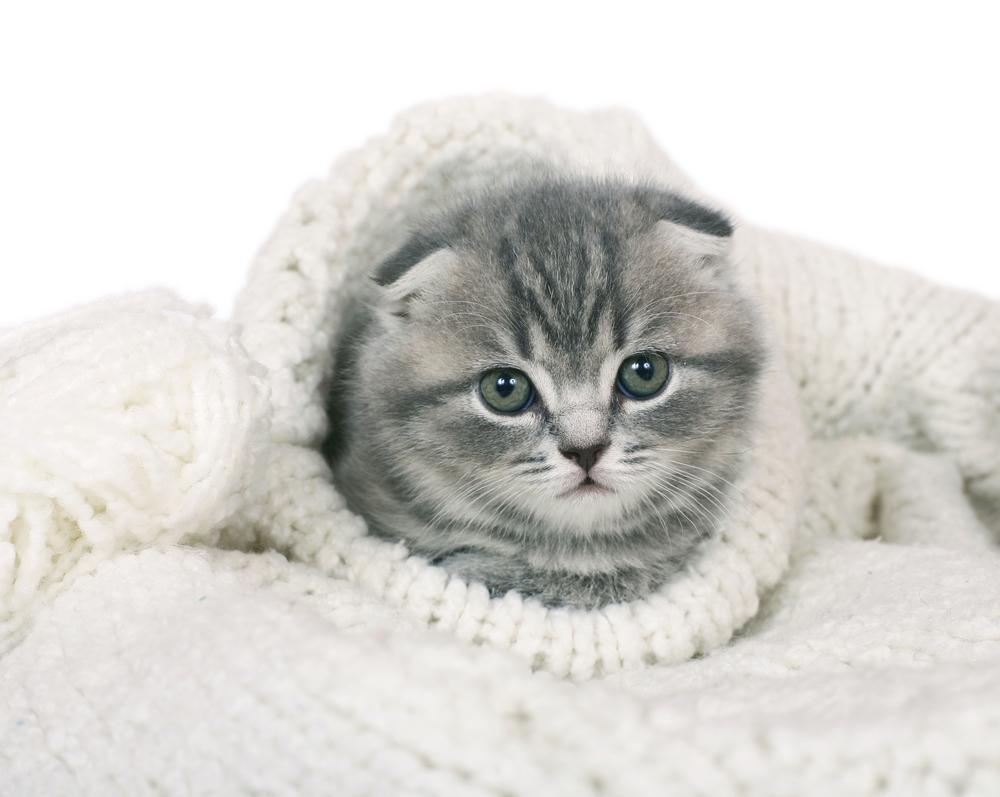 mačke pozimi zebe, mačka zavita v deko