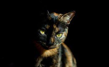 želvovinatsa mačka