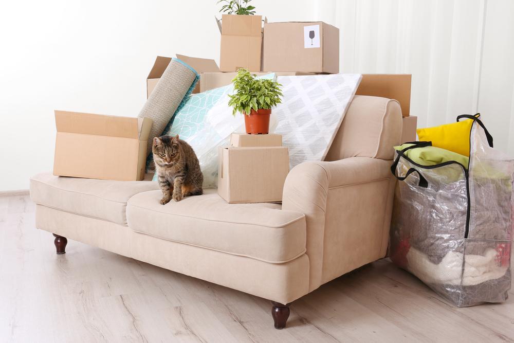 selitev z mačko