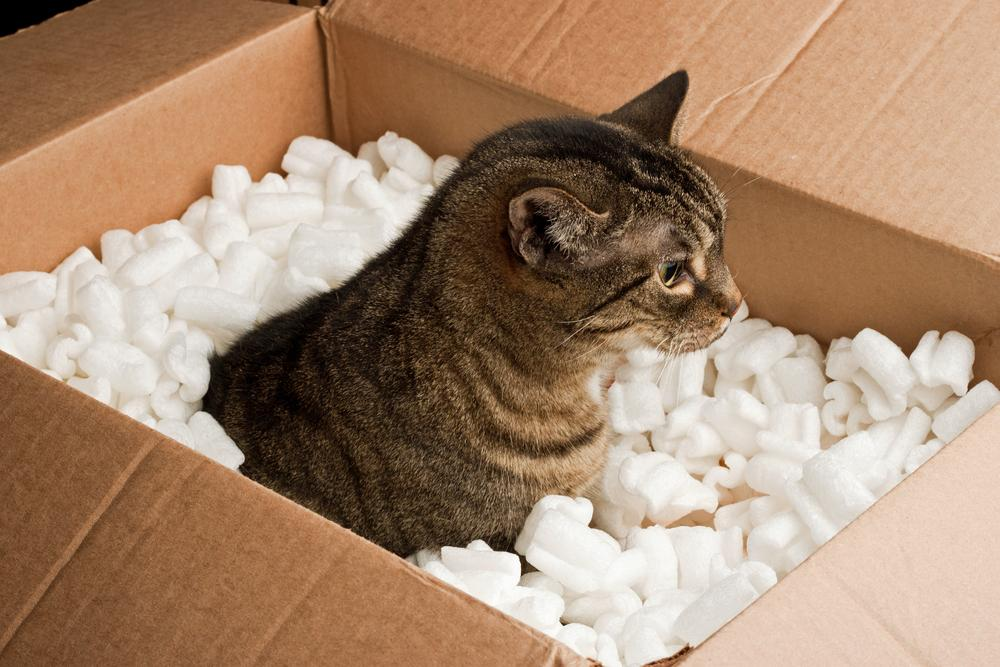 mačka v škatli
